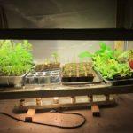 Best Heat Lamp For Plants