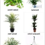 Best Sun Lamp For Plants