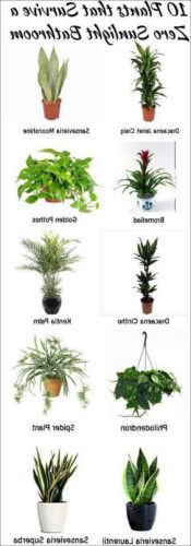 Best Sun Lamp For Plants