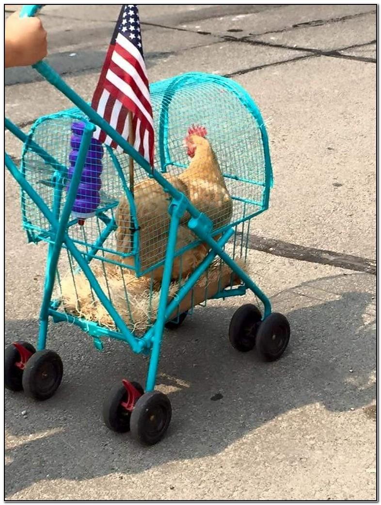 Homemade Chicken Stroller