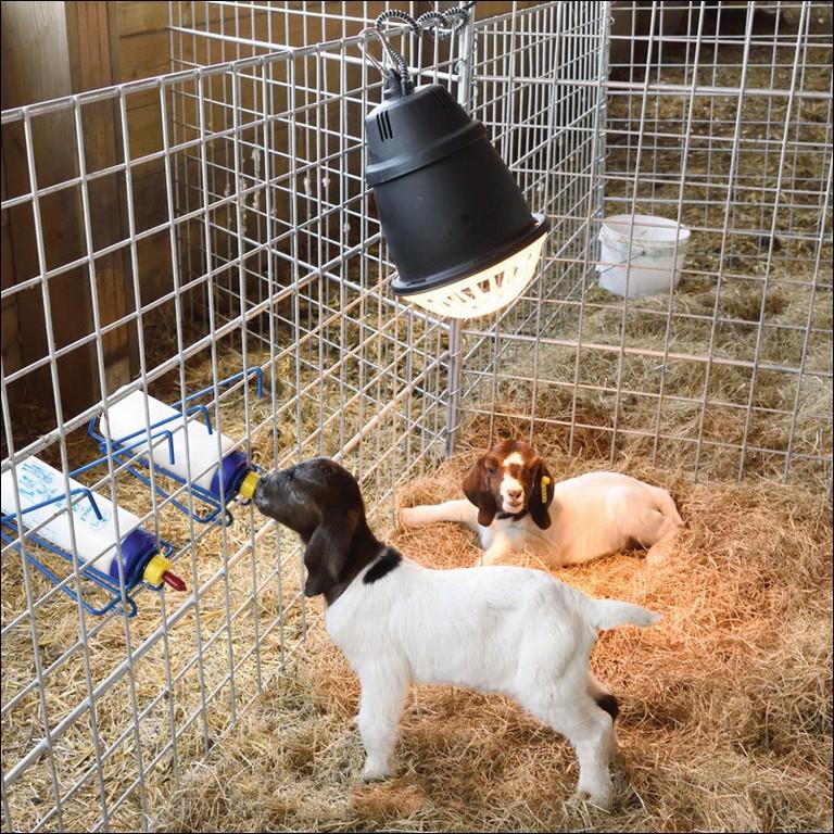 Solar Heat Lamp For Dog House