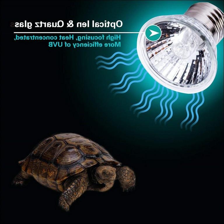 Turtle Heat Lamp Off At Night