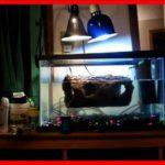 Turtle Heat Lamp Petsmart