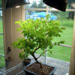 Uv Heat Lamp For Plants