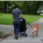 Walking Dog With Stroller