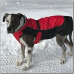 10 Best Dog Jackets For Winter