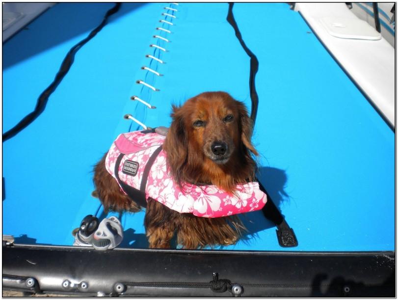 Academy Dog Life Jackets