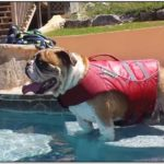Best Dog Life Jacket For Bulldog