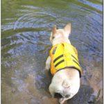 Best Dog Life Jacket For French Bulldog