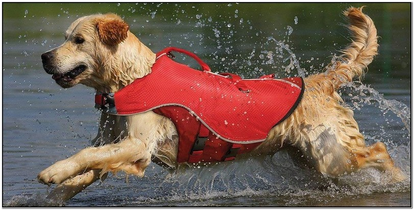 Best Dog Life Jacket Uk