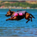 Best Dog Life Jackets 2018