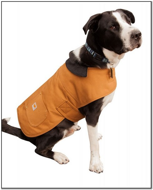 Carhartt Dog Jacket Orange