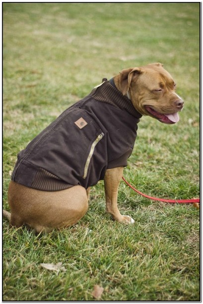 Carhartt Dog Jacket Uk