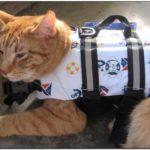 Cat Life Jacket