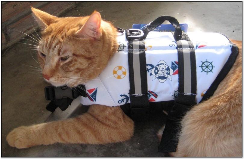Cat Life Jacket Shark