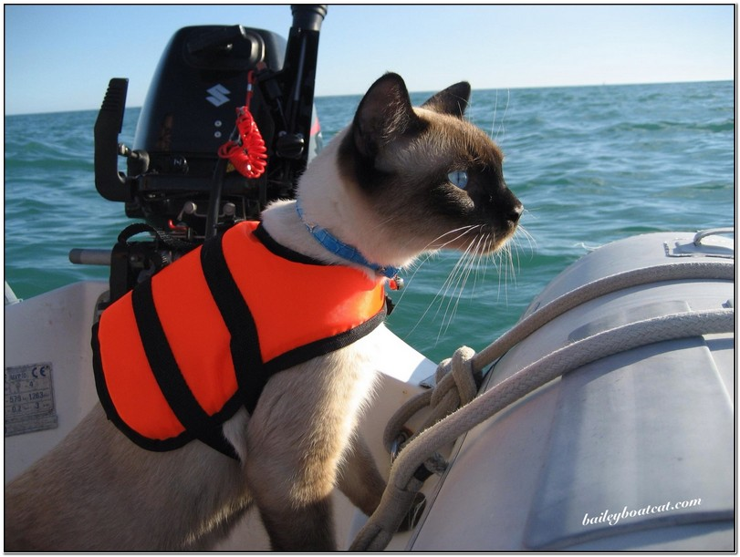 Cat Life Jacket Uk