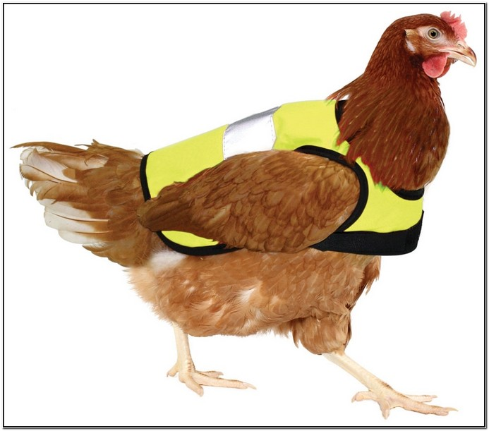 Chicken Jackets Nz
