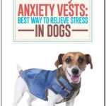 Dog Anxiety Jacket Reviews