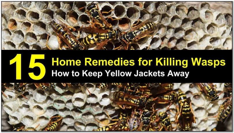 Getting Rid Of Yellow Jackets Under Deck