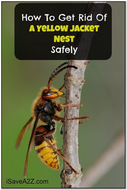 How To Get Rid Of Yellow Jacket Nest In The Ground