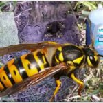 How To Get Rid Of Yellow Jacket Nest Naturally