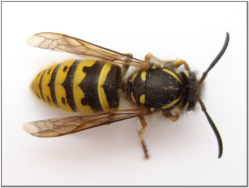 How To Get Rid Of Yellow Jacket Nest Under Porch