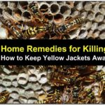 How To Get Rid Of Yellow Jackets Outside Naturally
