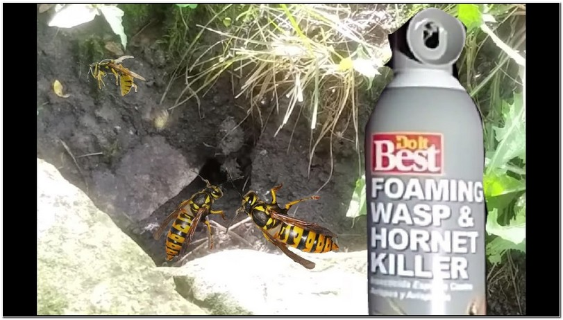 Killing Yellow Jacket Nest In Wall