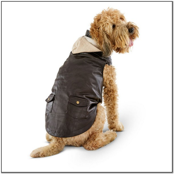 Leather Bomber Jacket For Dogs