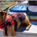 Nrs Life Jacket Dog