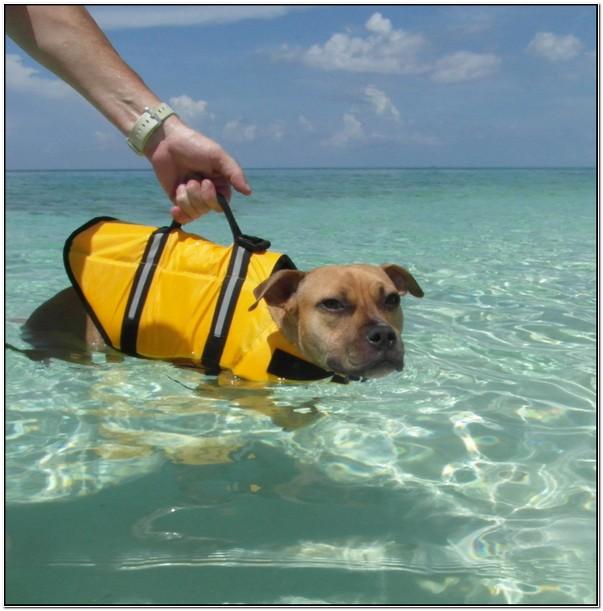 Shark Fin Dog Life Jacket Uk