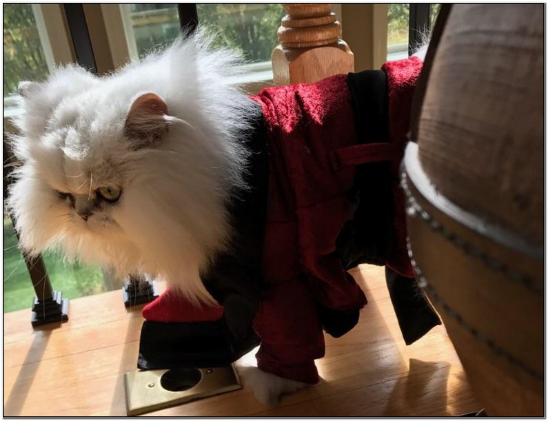 Smoking Jacket For Cats