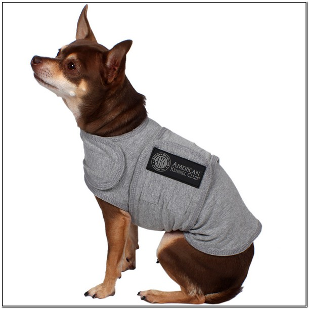 Thunder Jacket For Dogs At Walmart