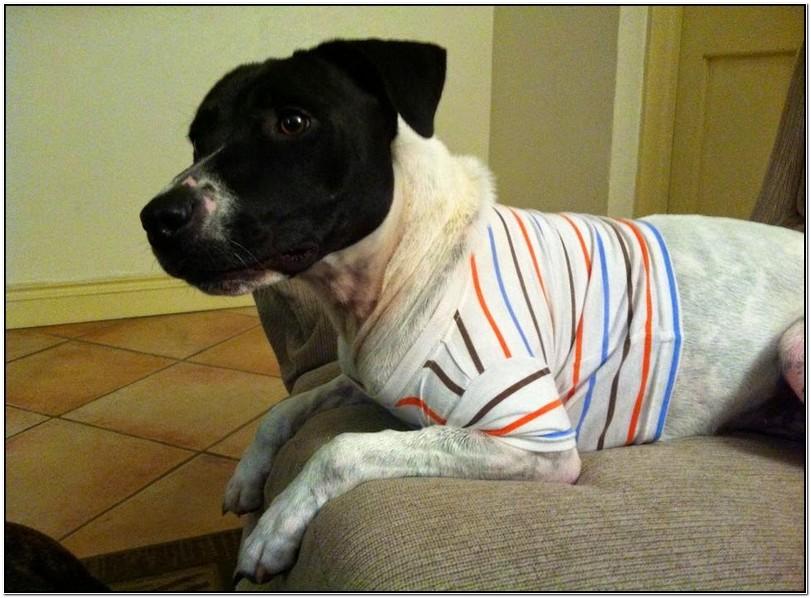 Thunder Jacket For Dogs Diy
