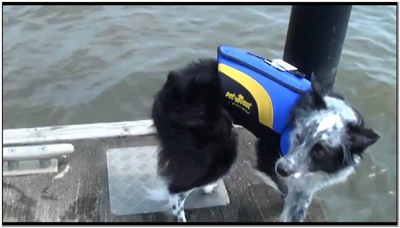 West Marine Dog Life Jacket