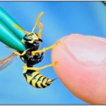 What Is A Yellow Jacket Look Like
