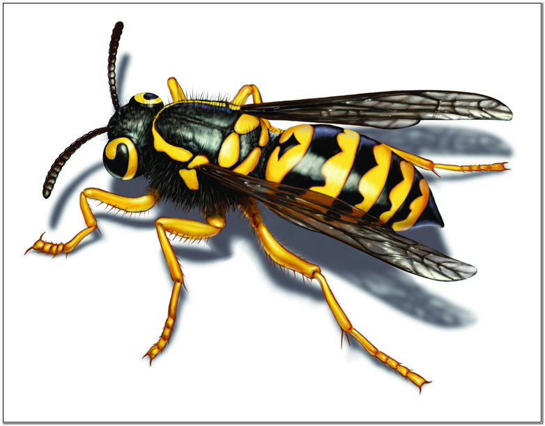 What Is A Yellow Jackets Purpose