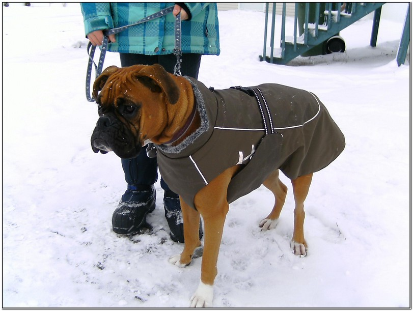 Winter Jackets For Boxer Dogs