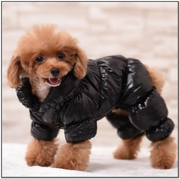 Winter Jackets For Small Dogs