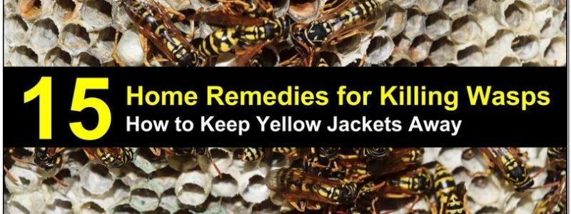 Yellow Jacket Repellent Essential Oils